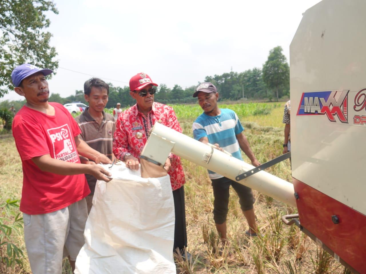 Peduli Petani, Bupati Loekman Bantu Petani Panen Padi